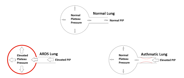 lung patho comparison